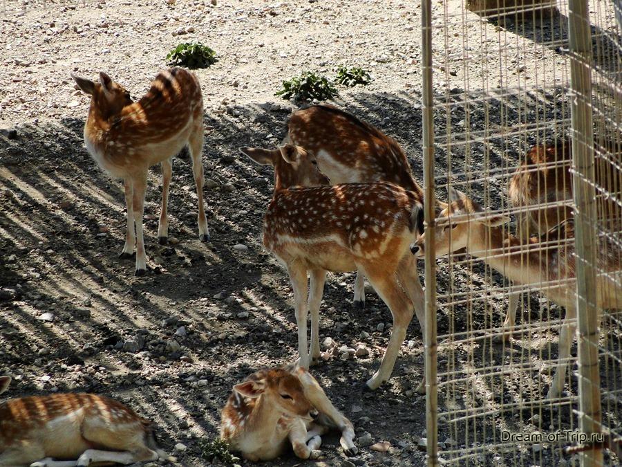 Зоопарк в Монастыре Превели.