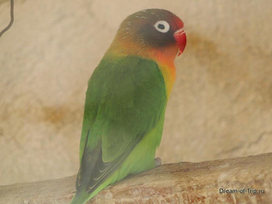 Зоопарк в Монастыре Превели. Попугайчик.