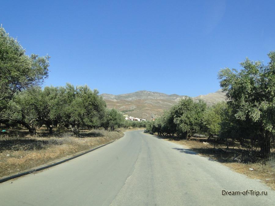 Дороги на Крите. Оливковые рощи.