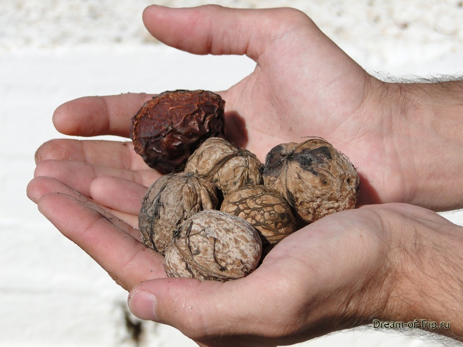 Грецкие орехи растут на острове Крит.