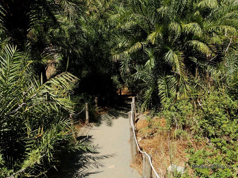 Пальмовый Пляж Превели на Крите. Тропинка.