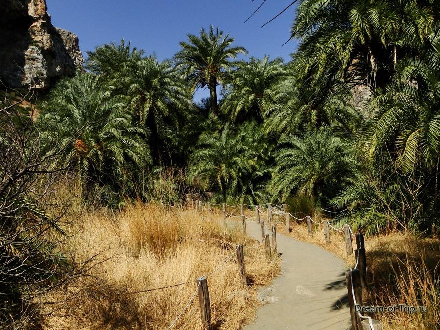 Пальмовый Пляж Превели на Крите. Экзотические виды.
