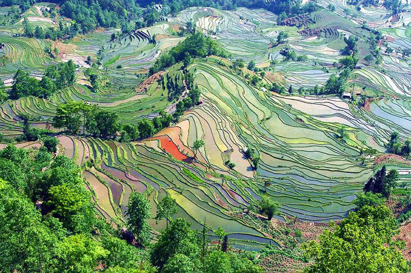 Рисовые террасы в  Юньнань.