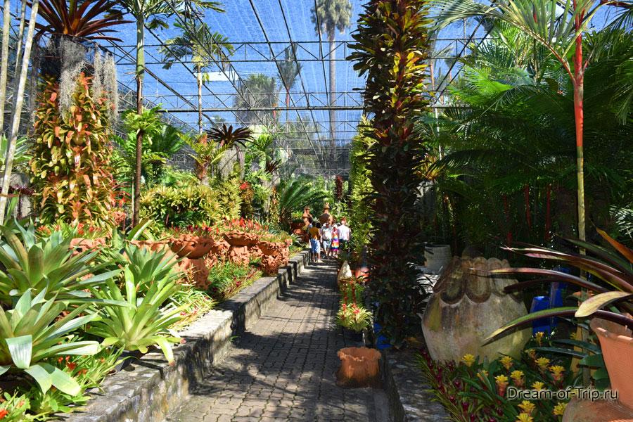 Сад бромелиевых в Нонг Нуч