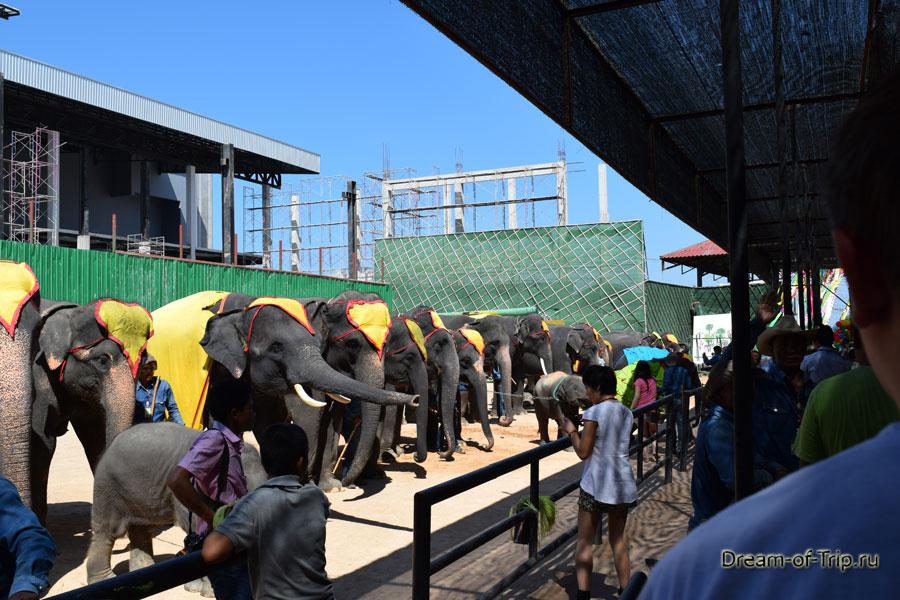 Слоники готовятся к выступлению.