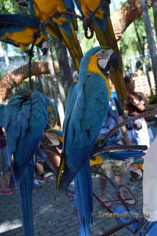 Попугаи в саду Нонг Нуч