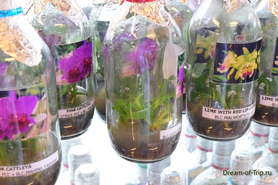Орхидеи можно купить в таких баночках.