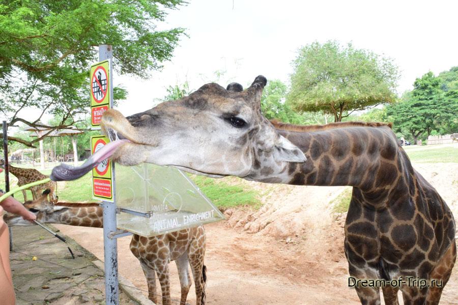 Паттайя зоопарк кхао кхео как добраться