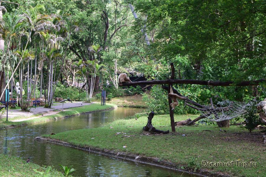Обезьяны в Кхао Кхео.
