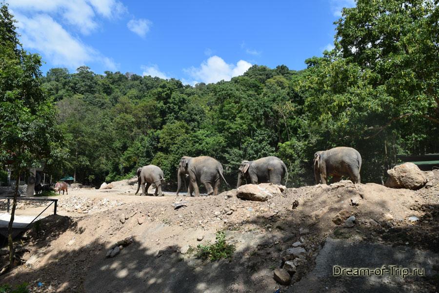 Слоны в Кхао Кхео.