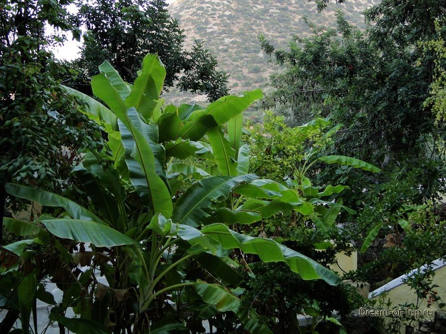 Растительность на Крите.