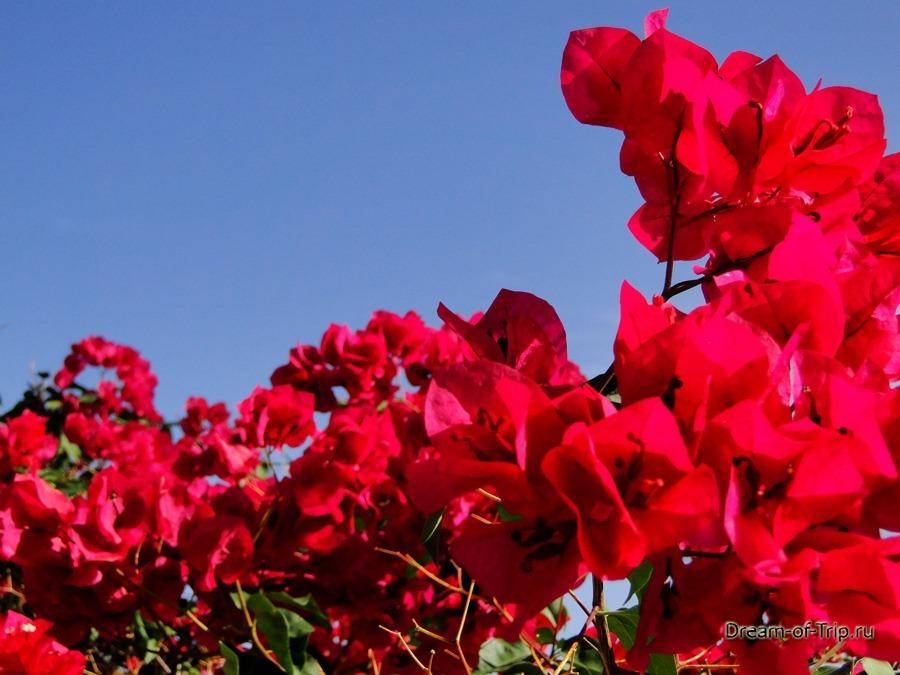 Цветы на Крите.
