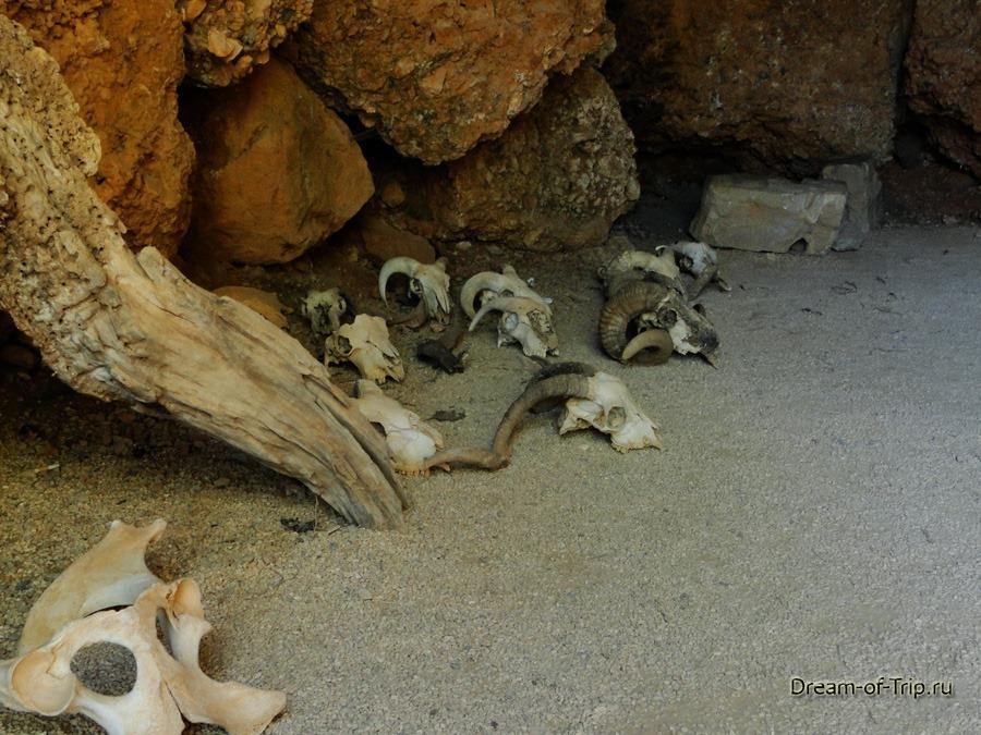 Музей HOMO SAPIENS на Крите. Черепа в пещерке.