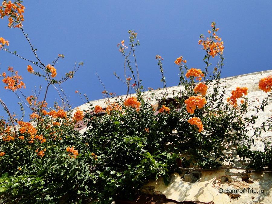 Цветы на острове Крит.