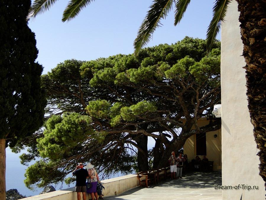 Верхний Монастырь Превели. Раскидистое дерево.