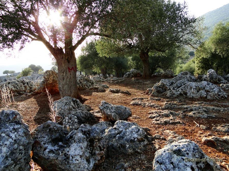 Природа на острове Крит.