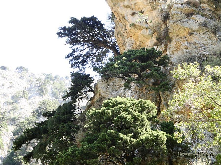 Деревья на скалах в ущелье Имброс.