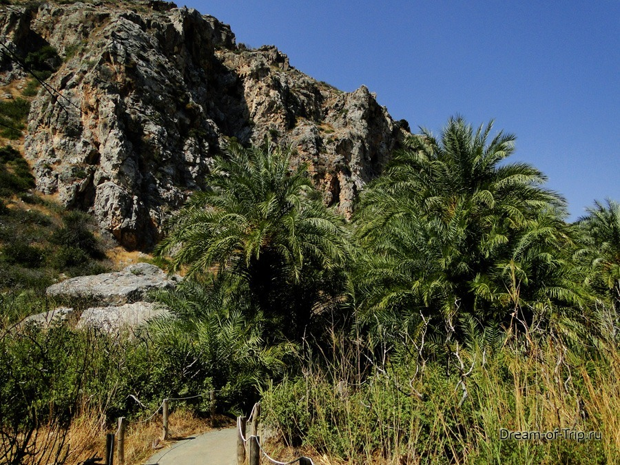 Превели. Прогулка по пальмовому лесу.