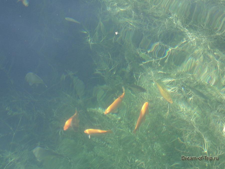 Рыбки в озере Курнас. Крит.