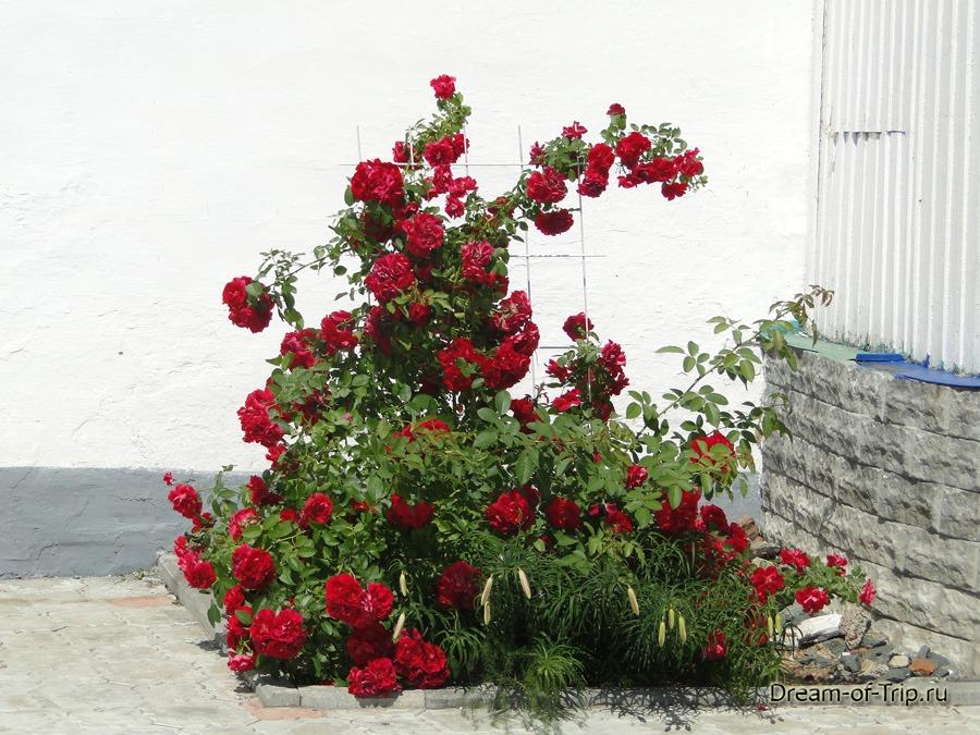 Раифский монастырь. Цветы.