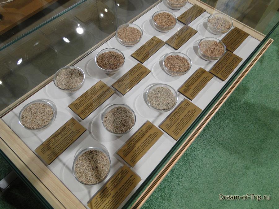 Зерна различных культур. Музей хлеба.
