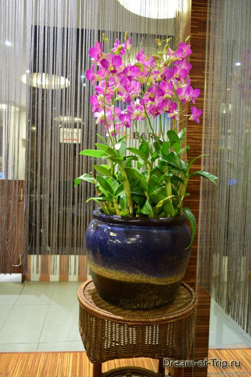 Орхидеи в отеле Baboona BeachFront Living