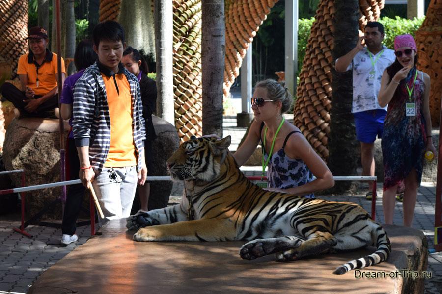Тигр в саду Нонг Нуч.