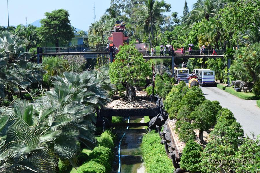 Пальмы в саду мадам Ног Нуч
