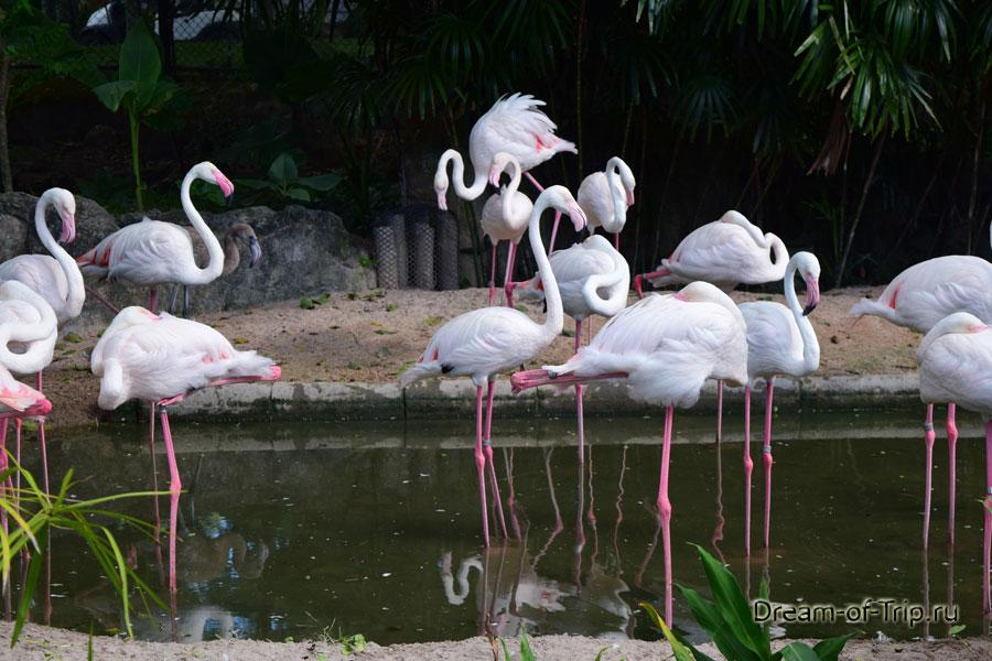 Фламинго в Кхао Кхео