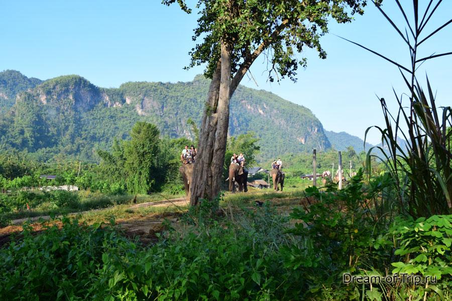 Прогулка на слонах по джунглям.