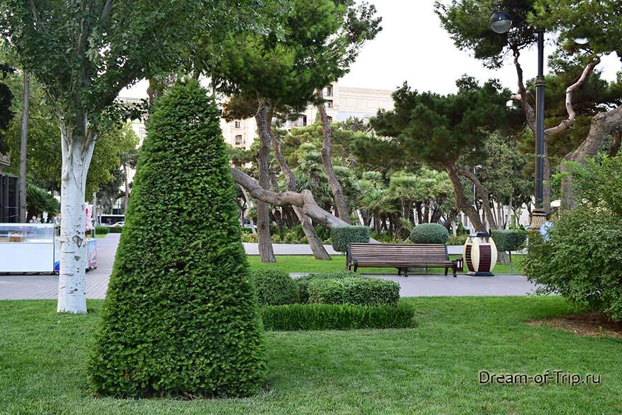 Растительность в Баку