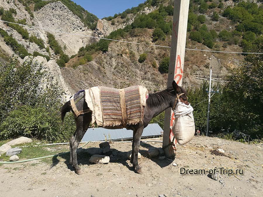 Ослик у кафе по дороге в поселок Лагич.